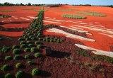 The Sand Garden at Cranbourne's Australian Garden.
