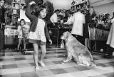 Girl and Dog in supermarket, Toorak Road, c.1970.