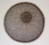 Bronwyn Oliver's <i>Umbra</i>, 2003, copper 110 x 110 x 20 cm.