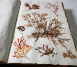 The Port Arthur seaweed album, created by Lady Catherine Frere, is dated 1836.