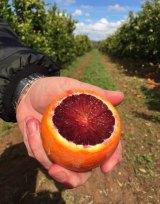 A tarocco blood orange.