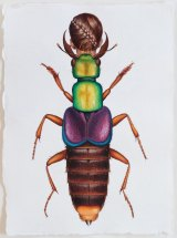Deborah Klein, <i>Actinus Imperialis Beetle Woman</i>, 2014, watercolour.