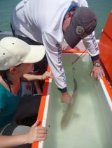 Sam Munroe (L) with researcher taking a sample from a sharpnose shark.