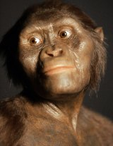 A close-up of the 3D model of the early human ancestor, Australopithecus afarensis, known as Lucy.