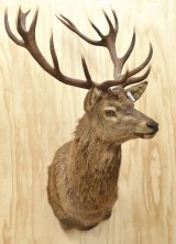 Racking up: Interest in taxidermy has increased over the past 10 years.