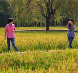 Locals stroll through a rice paddy in Shenyang designed by landscape architect Kongjian Yu.