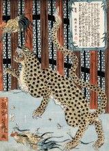 A woodblock print of  a leopard by Japanese artist Tsukioka Yoshitoyo.