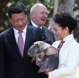 Chinese President Xi Jinping, Governor-General Sir Peter Cosgrove and Madame Peng Liyuan meet with 10-month-old baby wombat Walnut at Government House in Canberra.