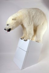 The stuffed polar bear highlights the effects of climate change.