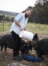 Paul West feeding the pigs.