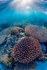 Queensland scientists have laid out a six-point plan to save the Great Barrier Reef.
