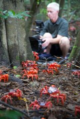 Cameraman Mateo Willis films the red crab migration on Christmas Island, Australia, while making Sir David Attenborough's <i>Planet Earth II</i>.