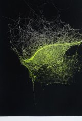 Sandra Selig, Universes 2007, spider silk, enamel, fixative on paper. Monash University Collection. Courtesy of Monash University Museum of Art