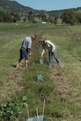 Ms McKimmie and pharmacist and land owner Richard French inspect newly planted seedlings which will form part of a vegetation corridor for wildlife on a Muswellbrook farm.