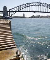 The seal sunbakes with a view of the Harbour Bridge
