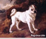 An early pug from around 1780. They had longer muzzles, and were much longer and taller than those bred today.