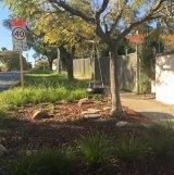 Mayor John Carey's favourite verge garden in his Town of Vincent.