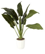 An artificial plant from Kmart.