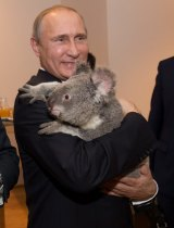 Even Russian President Vladimir Putin was charmed by a koala during the 2014 G20.