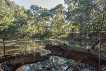 The billabong in Willsmere-Chandler Park in Kew is the last billabong left on the lower Yarra
