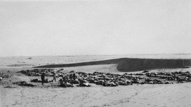 Australian soldiers walk between the dead bodies of horses in the desert.
