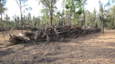 Illegal clearing near Baradine in north-west NSW.