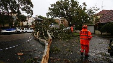 Hazards: SES workers clear up a fallen tree in Bellevue Hill.