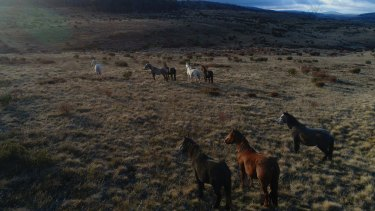 What to do with the wild horses has vexed park ranges for decades.