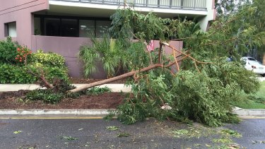 Damage around Montague Road at West End in the wake of November's storm.