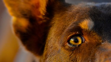 Hundreds of dogs in the region fled their homes during the fireworks overnight.