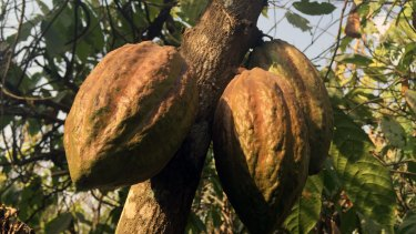 Women are marginalised in the cocoa supply chain and often unrecognised and underpaid.