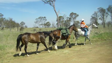 Belinda Ritchie and her travelling companions, Clincher, Trump and Ruben, on the Bicentennial National Trail.