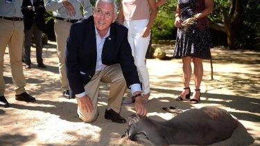 US Vice President Mike Pence pats a kangaroo during a visit to Taronga Zoo.