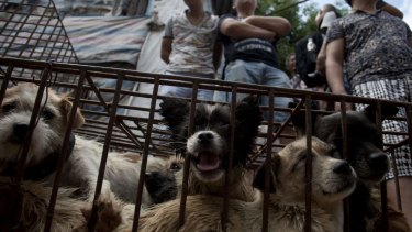 Vendors wait for customers to buy dogs in cages at a market in Yulin.
