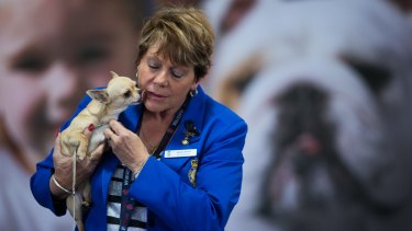 Marilyn Warren says dyeing dogs' fur is rife in the dog show world, even though it is illegal.