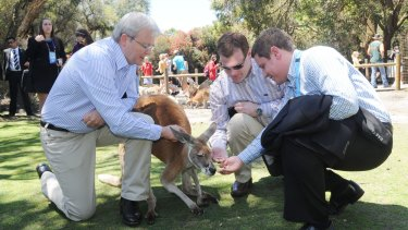 Kevin Rudd and then Canadian Foreign Affairs Minister John Baird (centre) feed the kangaroos during the Commonwealth Heads of Government Meeting in 2011 in Perth.