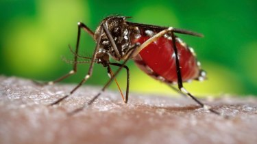 Increased risks: Mosquitoes are expected to bring tropical diseases south.