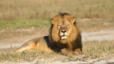 The killing of Cecil the lion has sparked a wider investigation into the poaching of big game in Zimbabwe.