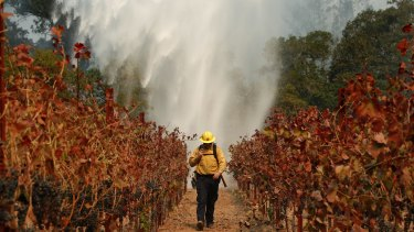 Firefighter Chris Oliver walks between burnt grape vines as a helicopter drops water over a wildfire near a Santa Rosa winery on Saturday.