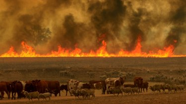 The Sir Ivan bushfire started east of Duneedoo in the NSW Central tablelands on a day that NSW fire authorities classified as catastrophic.