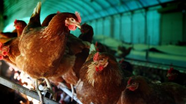 Consumer affairs ministers will meet this week to resolve the confusion around free range eggs.
