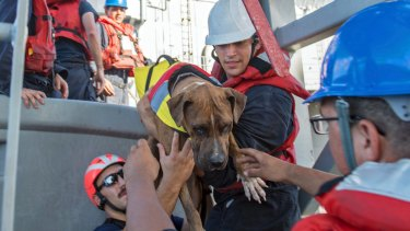 USS Ashland sailors help Zeus, one of two dogs who were accompanying two women who were rescued.