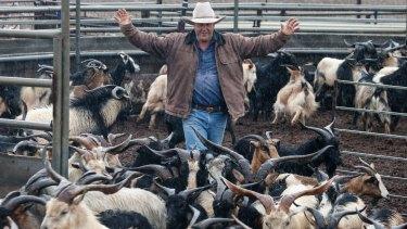Bourke goat farmer Robbie Newton herds wild goats ready for market.