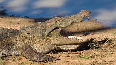 Bob Katter's crocodile concerns featured in Parliament on Monday.