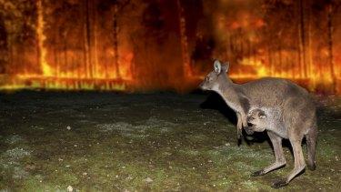 Bushfire Animal Rescue