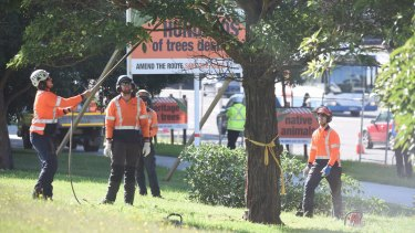 Trees being cut down along Alison Road earlier this month.