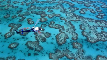 A helicopter over the reef, Heron Island.