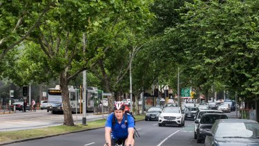 Almost 80 trees are set to be removed from St Kilda Road.
