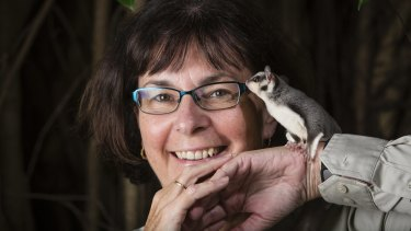 Something new: Professor Sue Carthew says there is much work to do before the glider species can be identified.