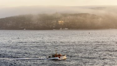 High humidity created a thick blanket of fog in Sydney.